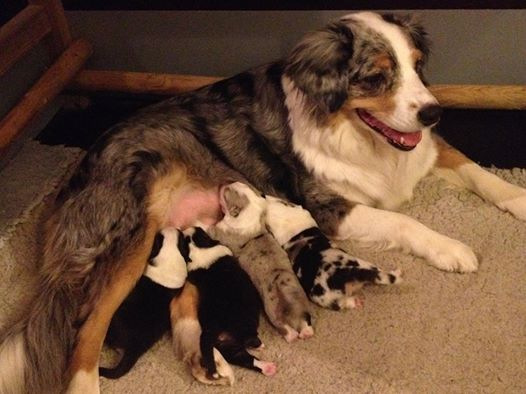 Casy har fået hvalpe – Puppies